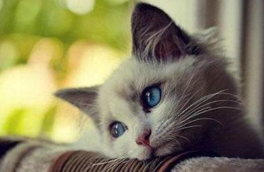 猫咪时间邀请码是多少?